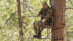 Bow Hunting Tree Stands